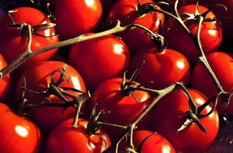 Les Rois de la Tomate